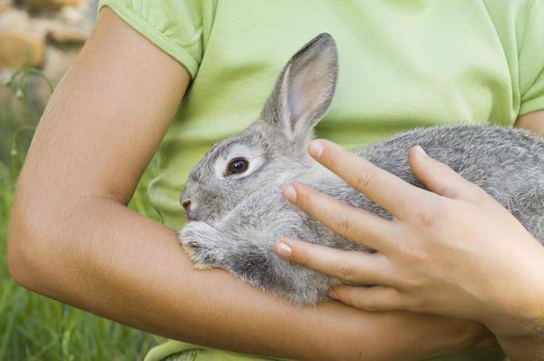 Tavşan kesimi