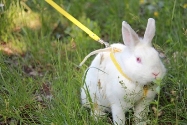 Tavşanlar nasıl bakım