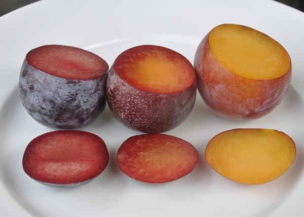 Kayısı, şeftali, erik ve elmanın en sıra dışı melezleri, tanımları, avantajları ve dezavantajları