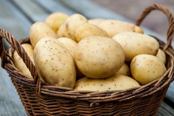 En iyi patates çeşitleri