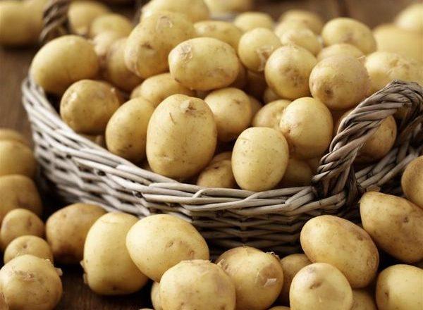 Erken patates çeşitleri