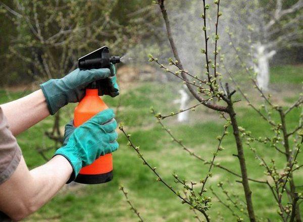 Bitkiler için borik asit