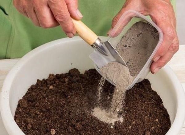 Kül, toprakla karıştırılabilir ve daha sonra ağaçların etrafına saçılabilir.