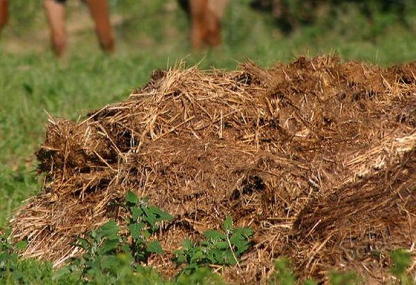 Gübre samanı gübresi gübre verimini 2 kat artırır