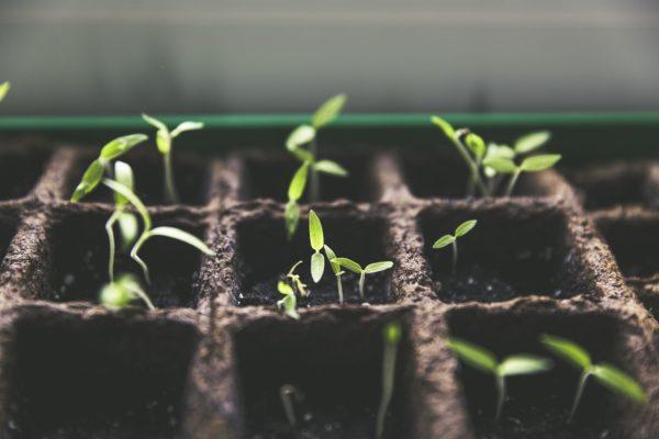 Salatalık ekimi Mayıs ayında gerçekleşecek