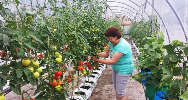 Salatalık ve domates birbirini ayırmak daha iyidir